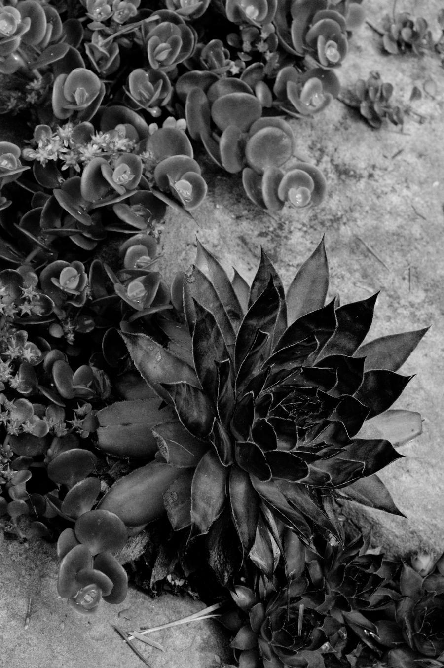 Flower Designs by