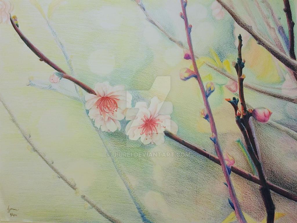 Spring by manga-drawing-luver