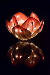 Light Lotus