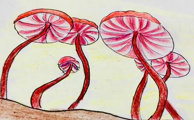 Daily mushroom#27 peppermint mushroom by jumpingllama2000