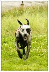 Run doggy run by Rizomes
