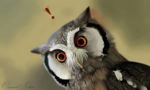 Owl alert!
