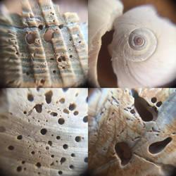 Shells (close up)