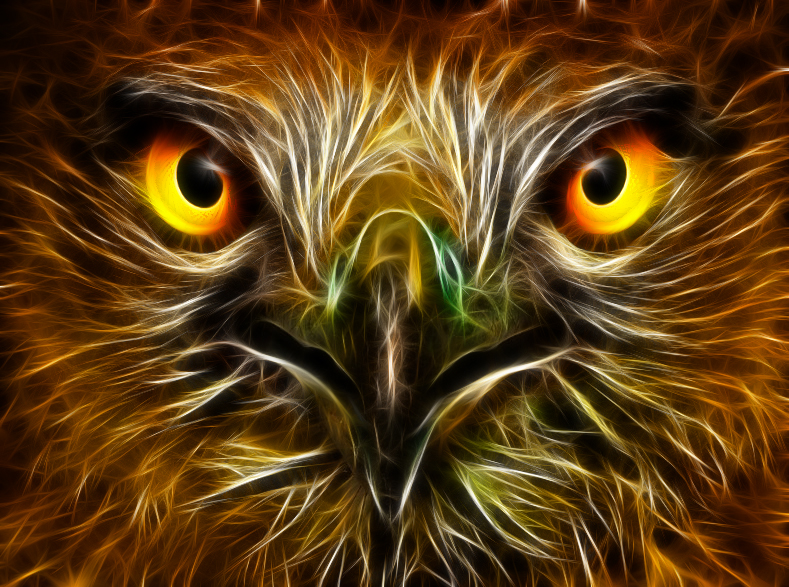 Eagle eyes wallpaper - photo#28