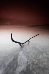 The lizard by AntonioAndrosiglio