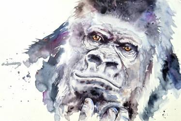 African gorilla