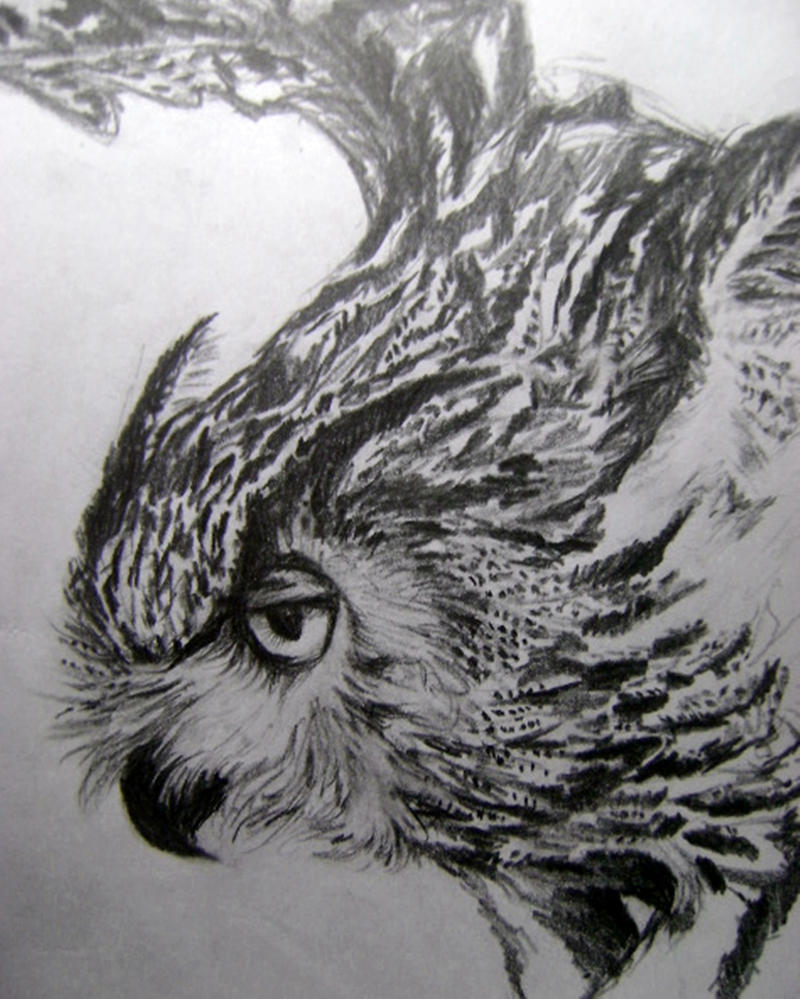 Owl study by Mr-Springserpent