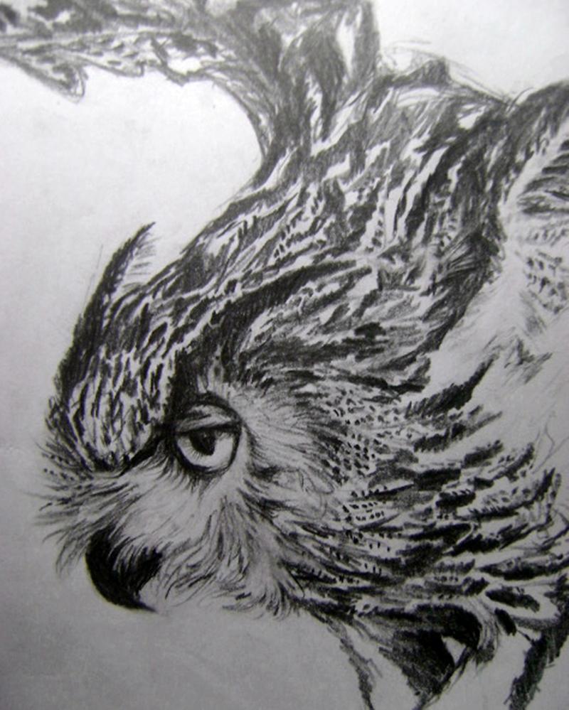 Owl study by Mr-Springserpent