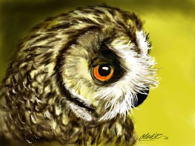 golden owl by Mr-Springserpent
