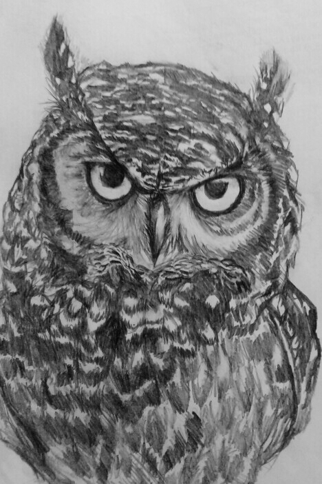 Owl study 2 by Mr-Springserpent