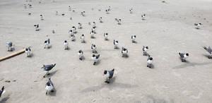 Seagulls at the Beach