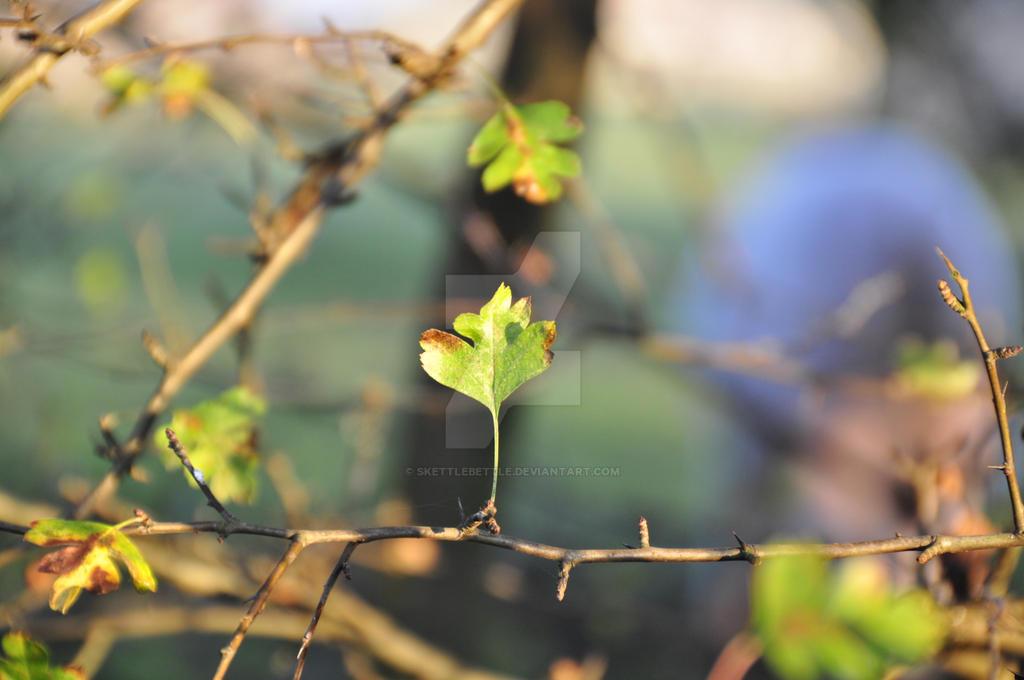 Nature S Purest Rest Factor