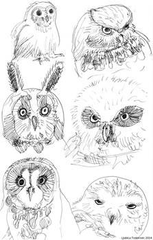 May22-2014-owls