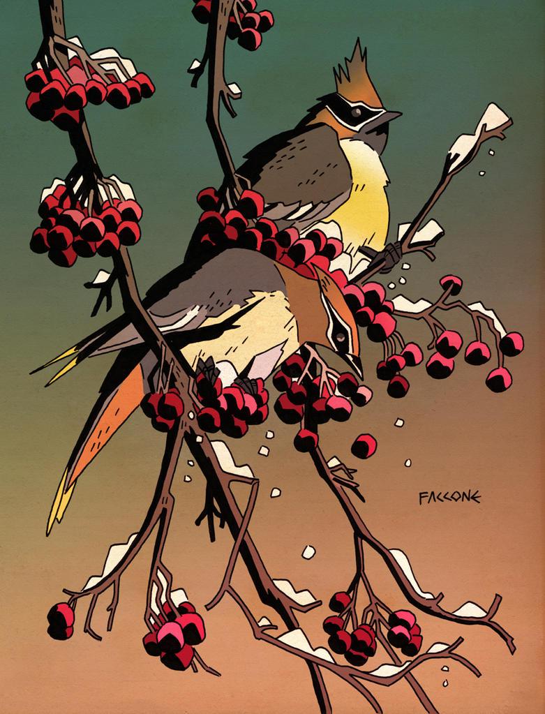 Birds by ChrisFaccone