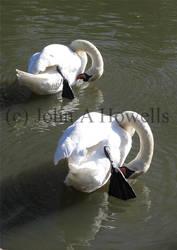 Swan pair mirror