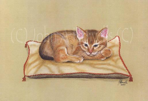 Aby Kitten