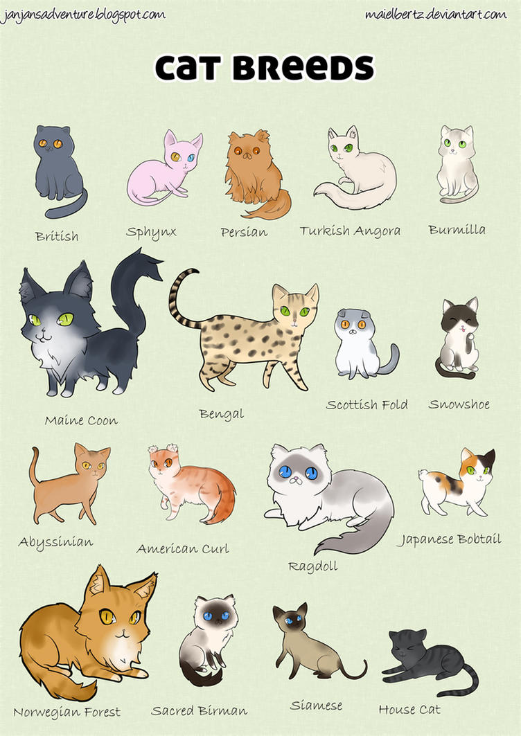 Poster Of Different Cat Breeds