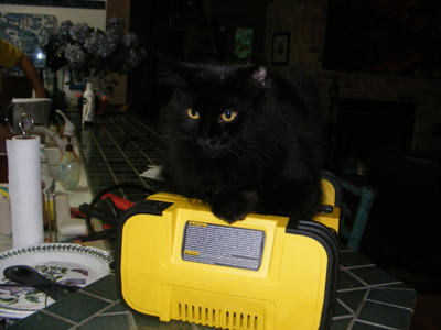 cat battery charge by skittygirlstephy1980
