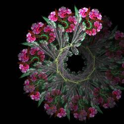 Nightly Bloom by Avinash