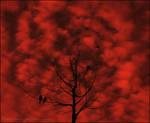 Reddish Day
