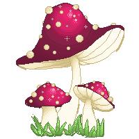 Mushrooms by FollowingBlackRabbit