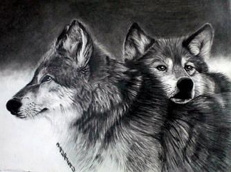 wolves   graphite