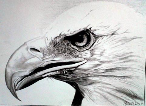 Eagle  graphite
