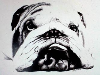 Bulldog  Bic pen
