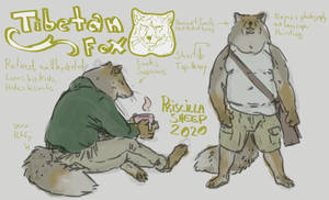 Tibetan fox sketches