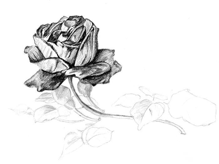 Line Art Rose Flower : Flower ps creative line drawing flowers painting