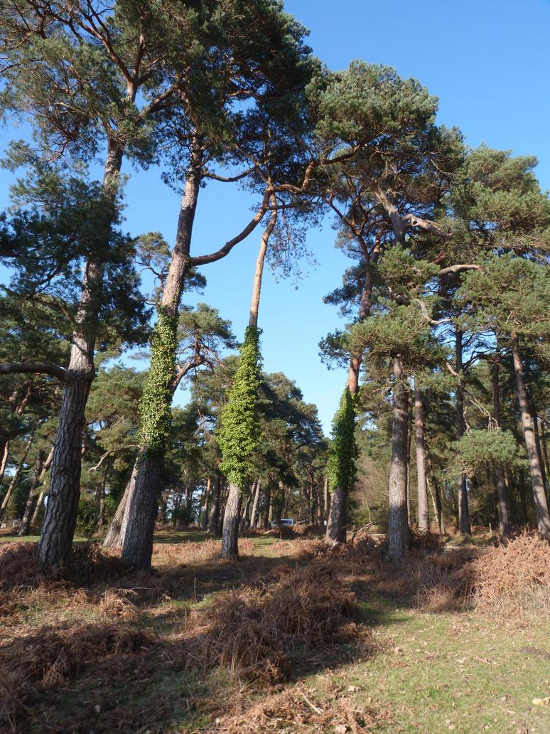 New Forest 86 by LadyxBoleyn