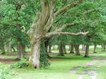 New Forest 2012 09