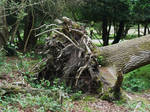 New Forest 2012 17