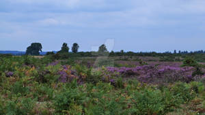 New Forest 2013 94