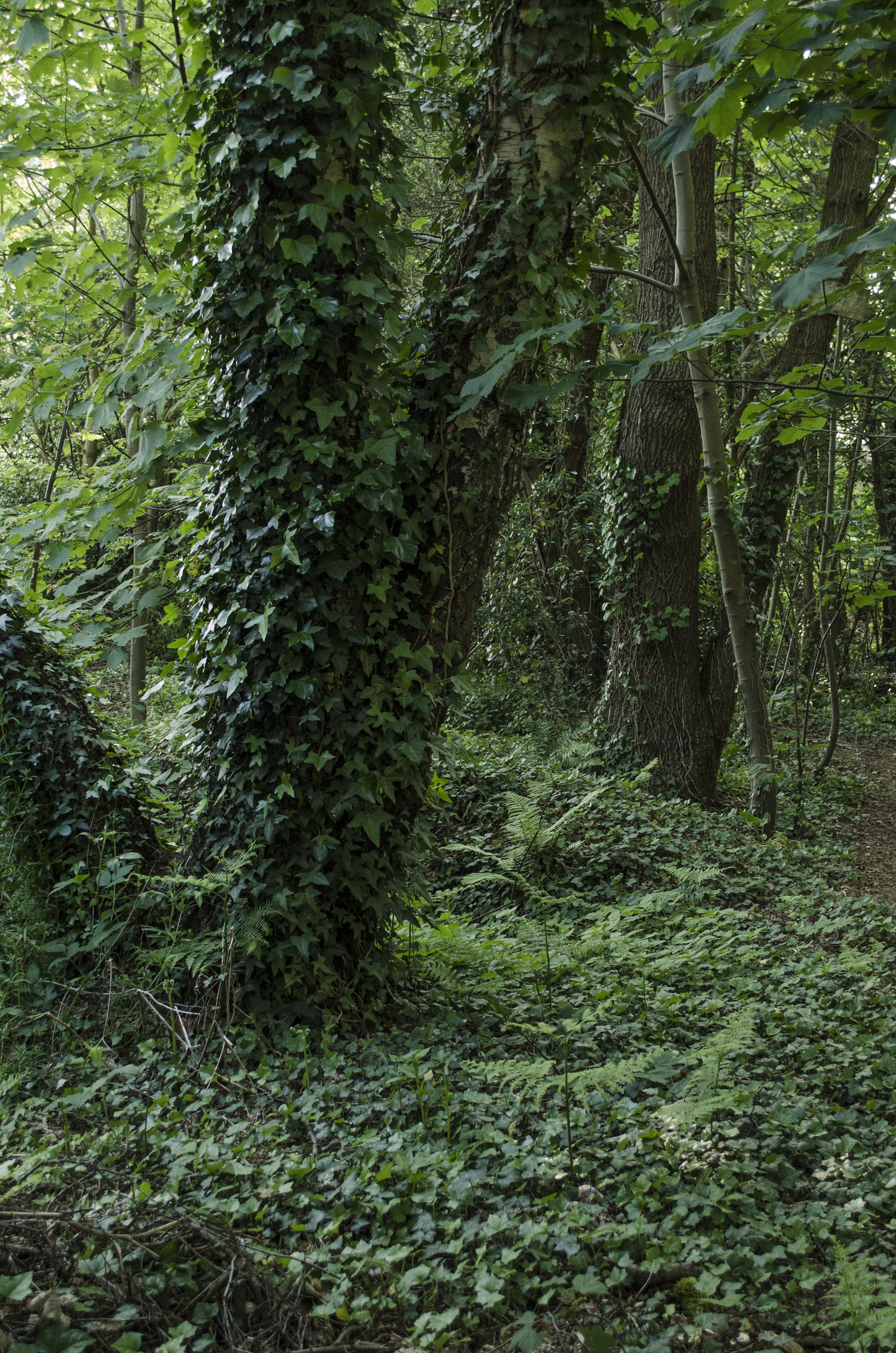 Woods 21 by LadyxBoleyn
