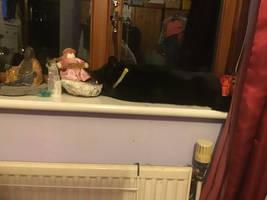 My cat asleep on my mothers windowsill