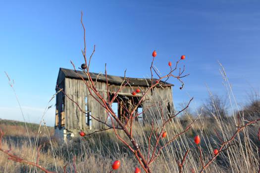 Really old barn