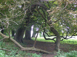 tangled trees by xXceinwenXx