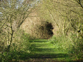 tunnel of branches