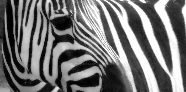 zebra by Monk3Girl