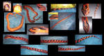 Snake Collage: Do you know this snake? by WhiteFoxKitsune
