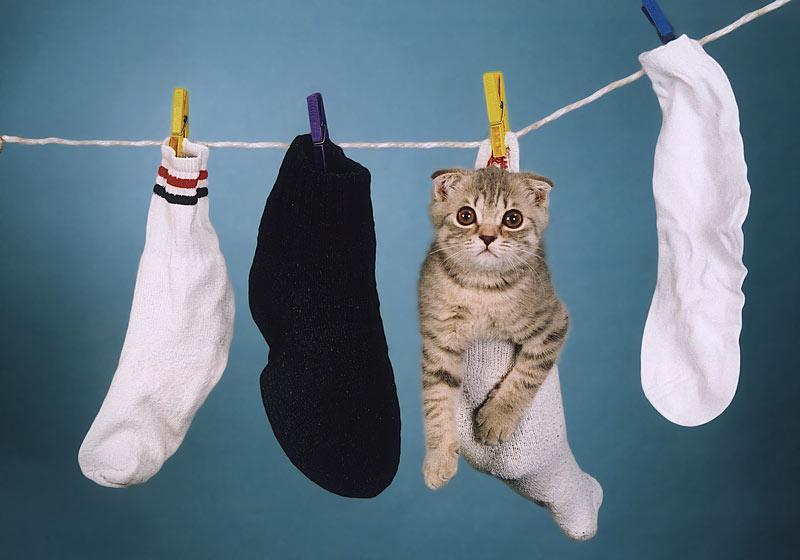 Socks by OlegZotov