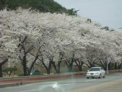 Japanese tree2 by Angelforu