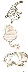 cat by ahmad-nady