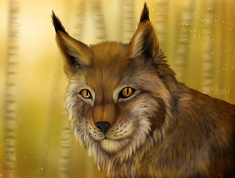 Bobcat in the woods by Chrystal-Art