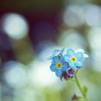 Elven flower by codeboy