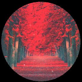 : red : by Serri765