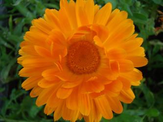 beautifoul flower