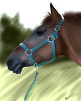 Horse by Castilvani