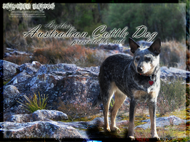 Acd 1 by stacybarnes